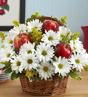 Apple Of My Eye/Daisies,Solidego,Apples