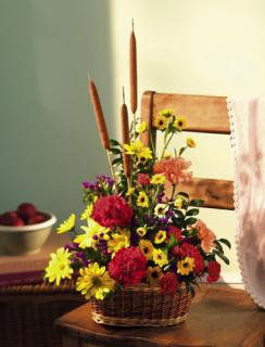Feast/Carns,Daisies,Cat Tails,Statice