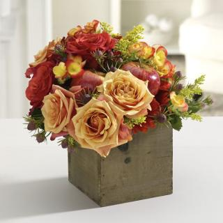 Happy Harvest/Apple,Roses,Solidego,freesia