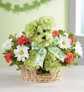 Lucky/Carnations,Daisies,Solidego
