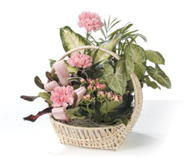 Basket of Joy/Carnations