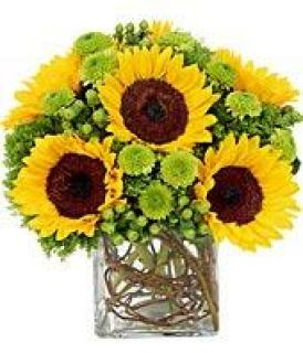 Sunflower Surprise/Gerbs,Buttons,