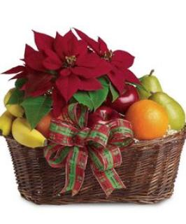 Fruit and Poinsettia/CLICK FOR INFORMATION