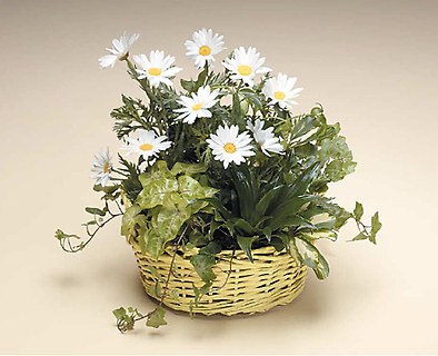 Basket of Green and Dasie\'s